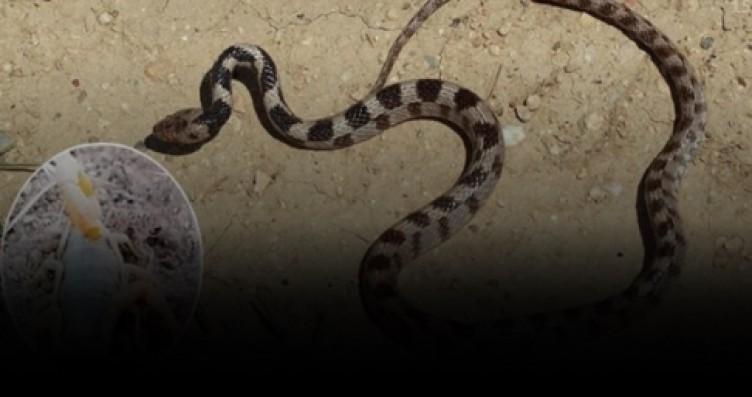 Türkiye'de Akrep ve yılan paniği! Onlarca kişi hastanelerde acile koştu