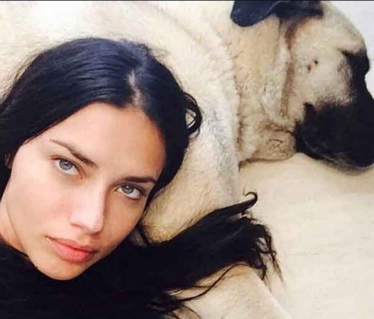 Sivas'tan Adriana Lima'ya üçüncü kangal köpek çağrısı