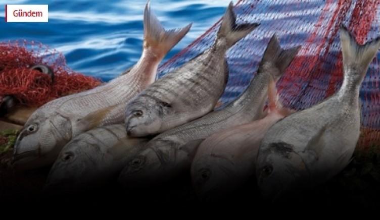 Balık alırken dikkat! Bu sahtekarlıklar pes dedirtti