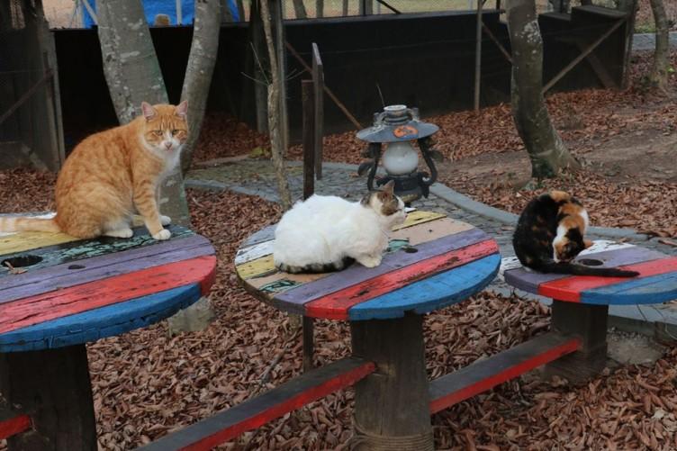Yuvasız kediler için 'Kedi Kasabası'