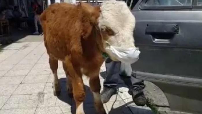 Koronavirüs mü: Maske takıp veterinere götürdüler