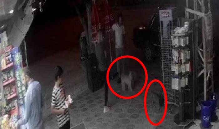 Sokak kedisi 2 köpeğe saldırdı: O kadar ciğer verme demiştim