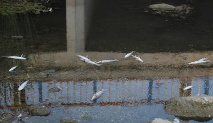 Turizm merkezindeki derede balık ölümleri tedirgin etti