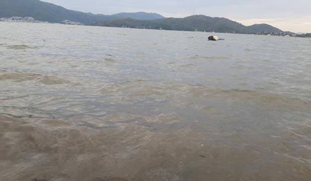 Muğla'da denizin rengi kahverengiye döndü: İşte nedeni
