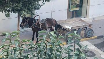 At arabasını kaldırıma park eden kişiye ceza kesildi