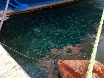 İstanbul Boğazı denizanası istilasına uğradı