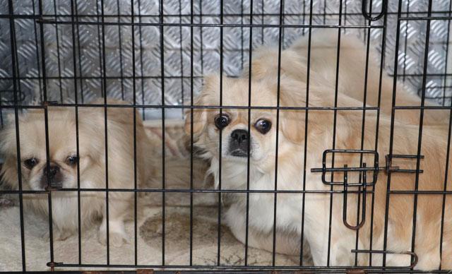 Ankara'da apartmana köpek operasyonu: 9 köpek kurtarıldı