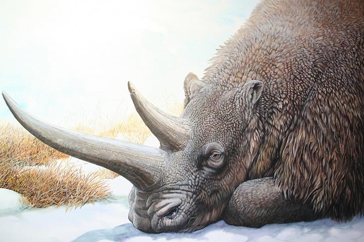 Yakutistan'da 50 bin yıllık gergedan fosili bulundu!