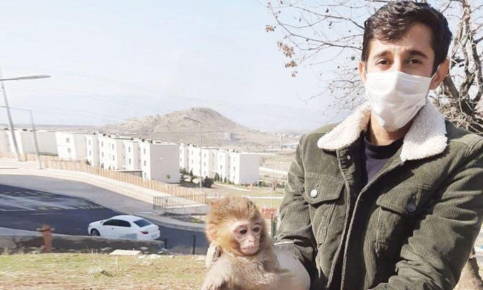Sınırda 4 örümcek maymunu ele geçirildi; polisler bile şaşırdı!