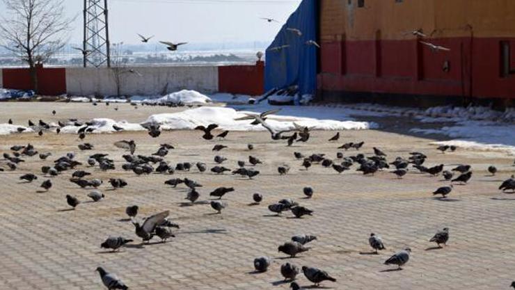 Muş'ta, doğada yiyecek bulmakta zorlanan kuşlara; halk yardım eli uzattı