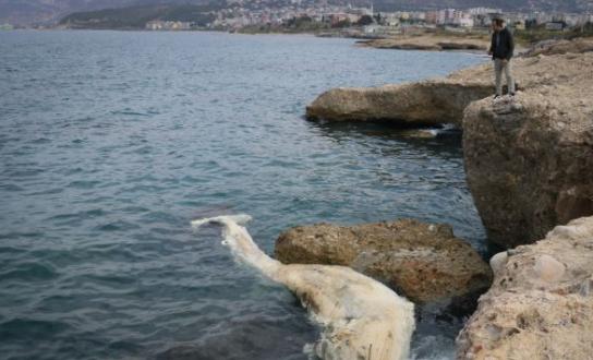 12 metre uzunluğundaki ölü balina yavrusu kıyıya vurdu