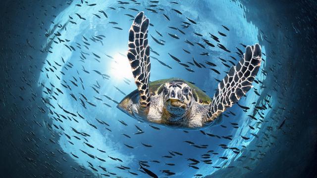 İstilacı türler ekosistemi bozuyor