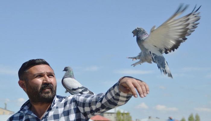 300 güvercini için arazi satın alıp, 350 bin lira harcadı