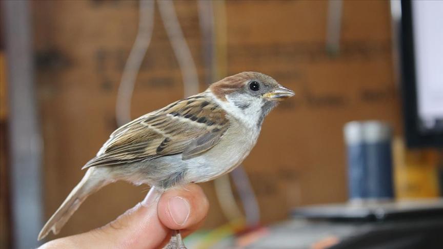 Üç kıtadaki kuşları buluşturan Aras Kuş Cenneti'nde bu sezon 5 bin kuş halkalandı
