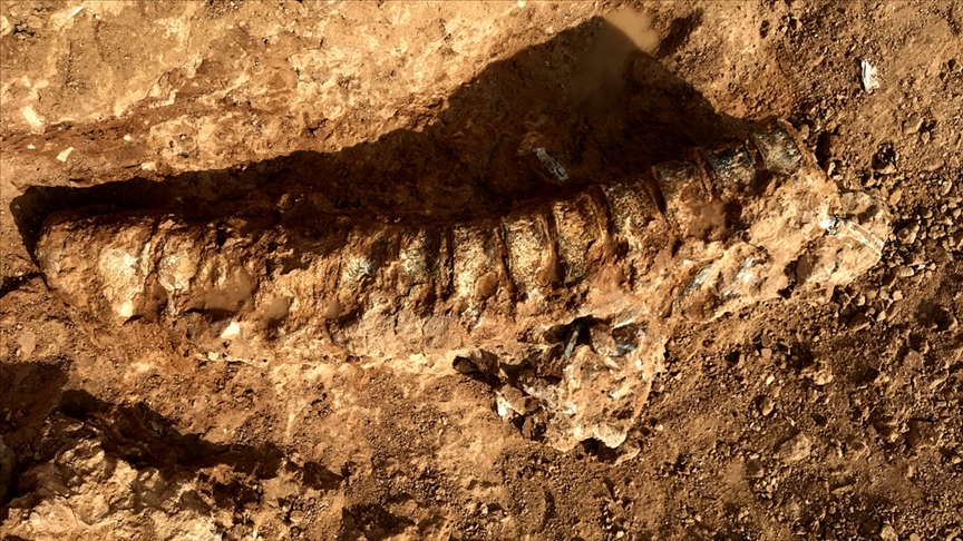 Bilim insanları 890 milyon yıl öncesine ait hayvan fosili buldu