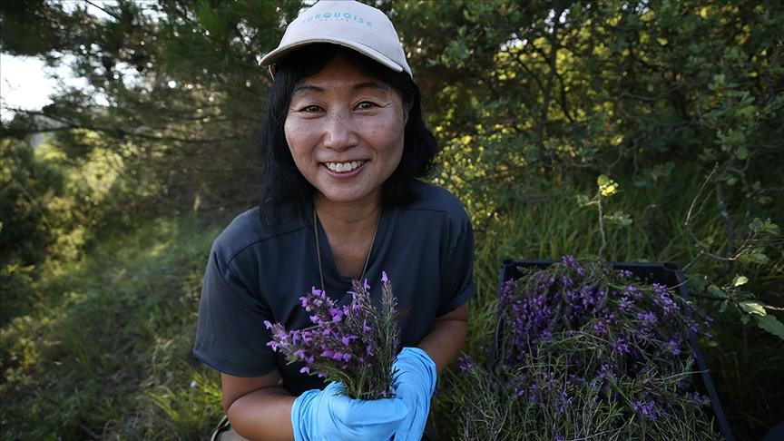 Dağlardan topladığı organik bitki çaylarını paketleyerek yurt dışına ihraç ediyor