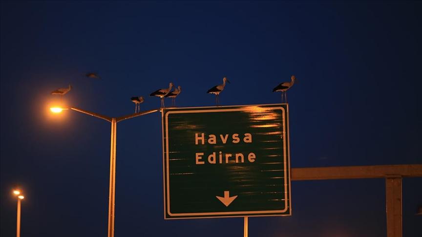 Kırklareli'nde göç yolunda yorulan leylekler aydınlatma direklerinde geceliyor