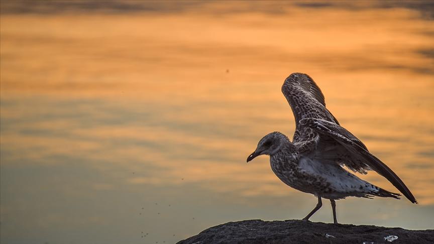 Doğa harikası Çıldır Gölü sonbahardaki göçe hazırlanan kuşlar ile şenlendi
