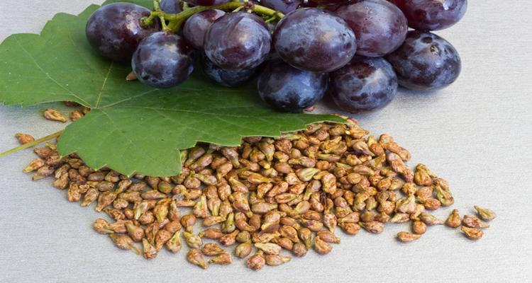 Üzüm çekirdeğinin 12 mucizevi faydası nedir?