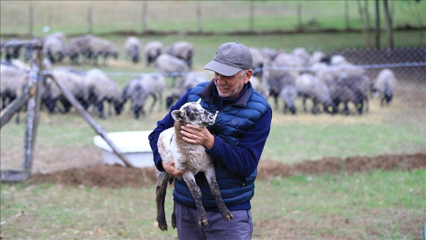 Şehir hayatından uzaklaşıp koyun yetiştiricisi oldu, şimdi talebe yetişemiyor