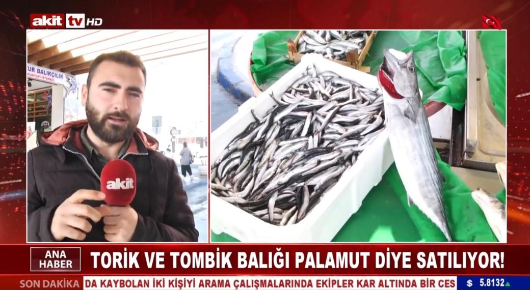 Torik ve Tombik balığı Palamut diye satılıyor !