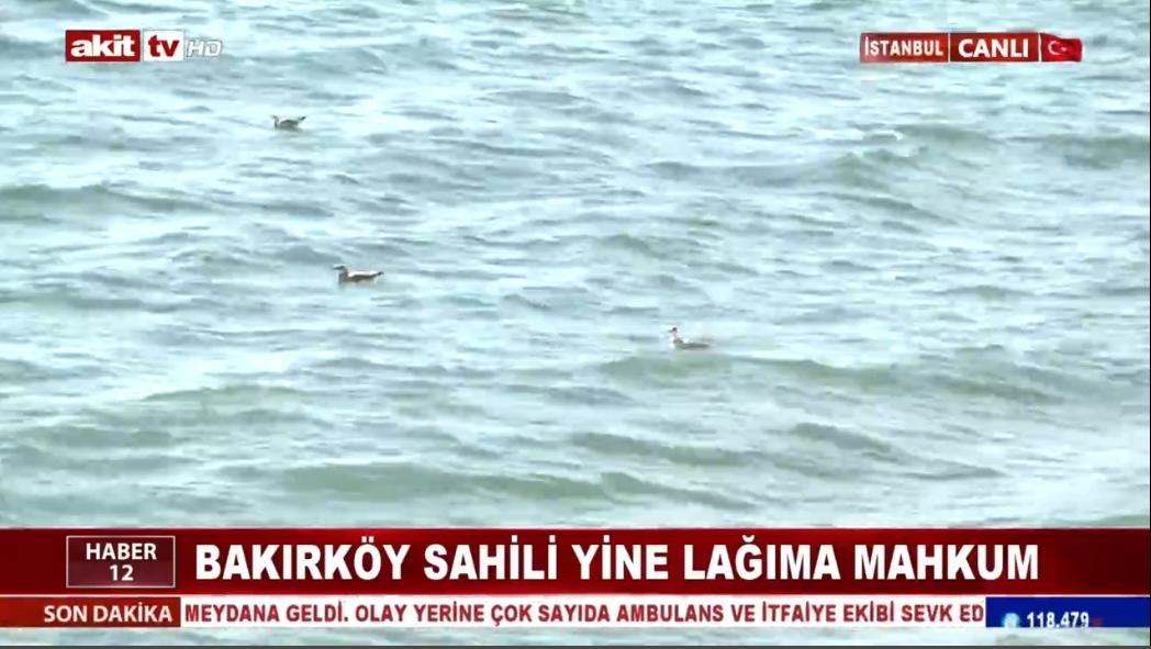 Bakırköy sahili yine lağıma mahkum