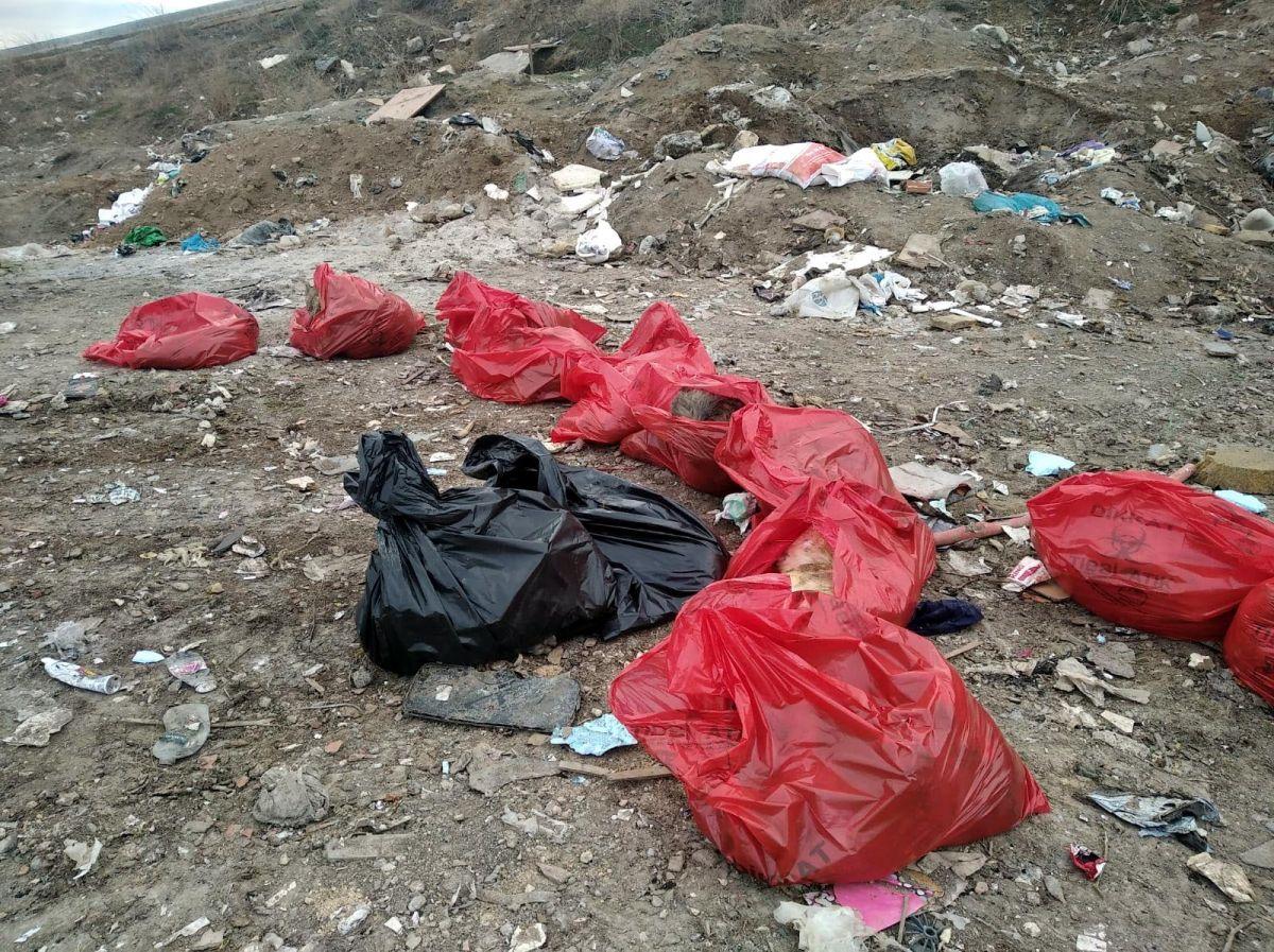 Ankara'da vahşet! Çok sayıda ölü köpek bulundu